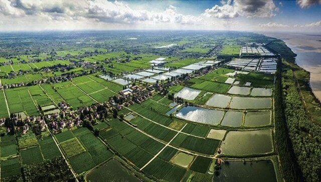 Wetland and rice field on Chongming Island